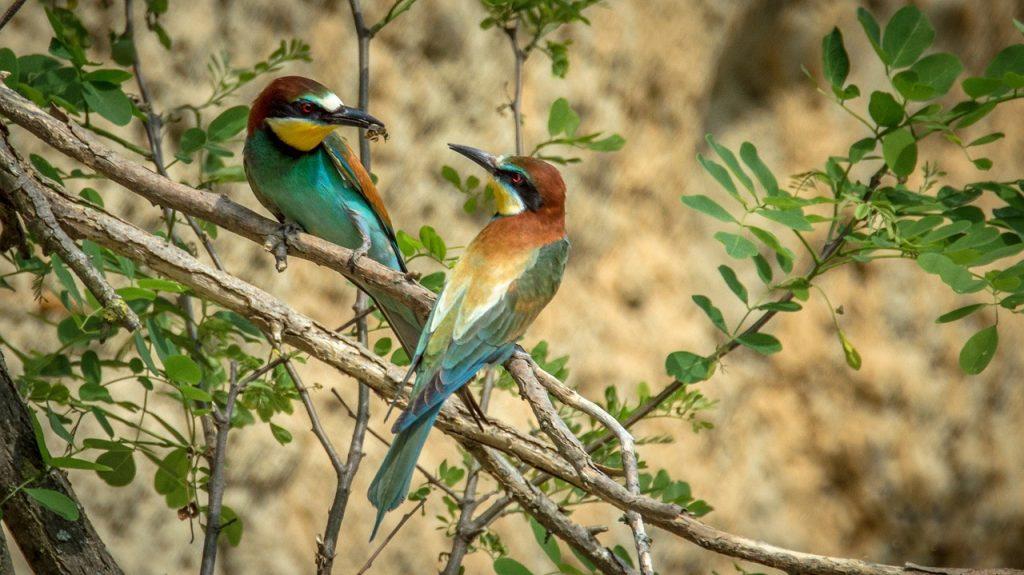 Razas de Pájaros