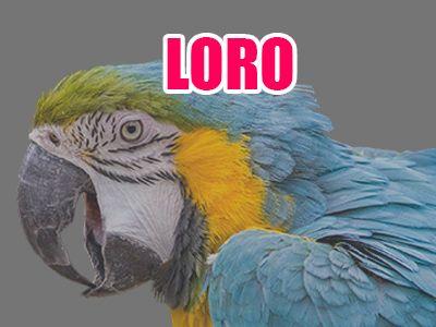 pájaro loro