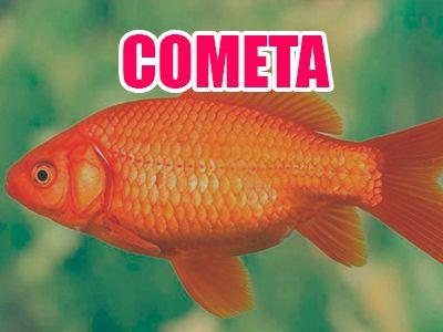 pez cometa
