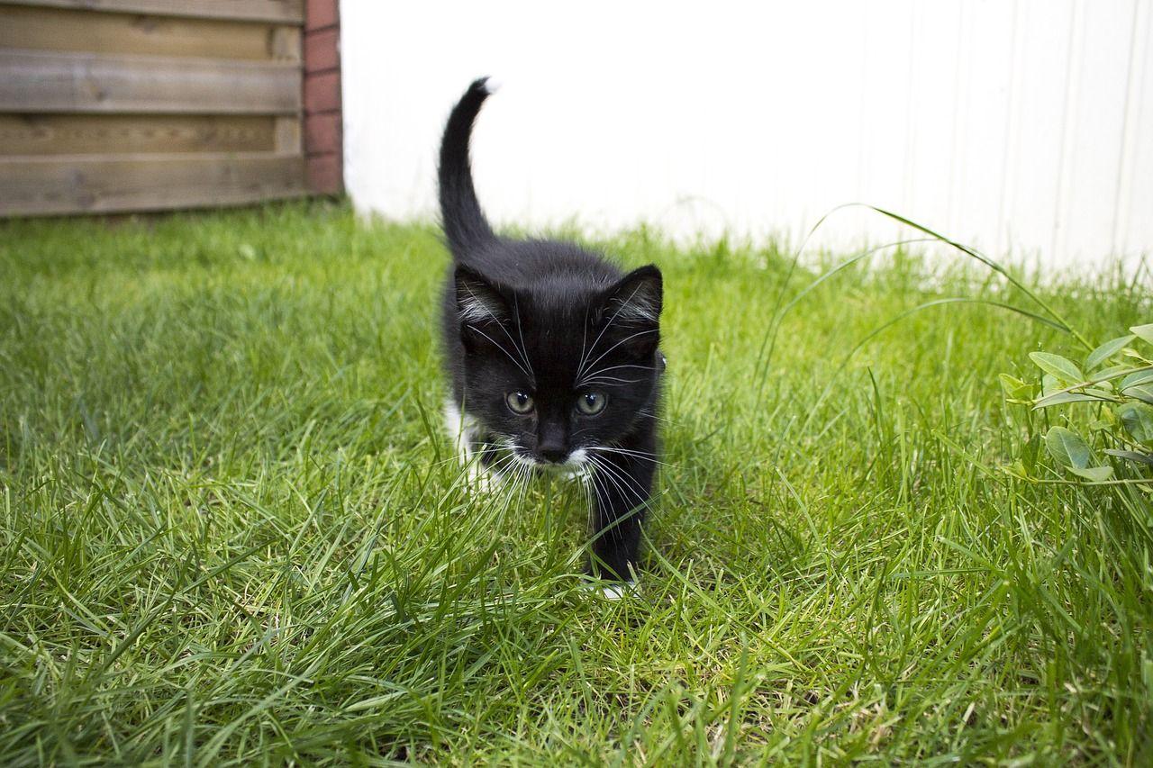 Qué es el catnip para gatos y cuáles son sus propiedades