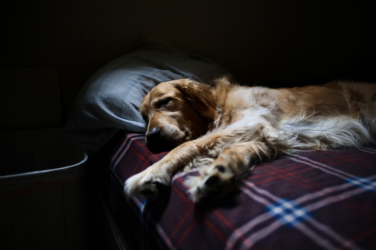 ¿Es bueno dormir con tu perro? Ventajas e inconvenientes