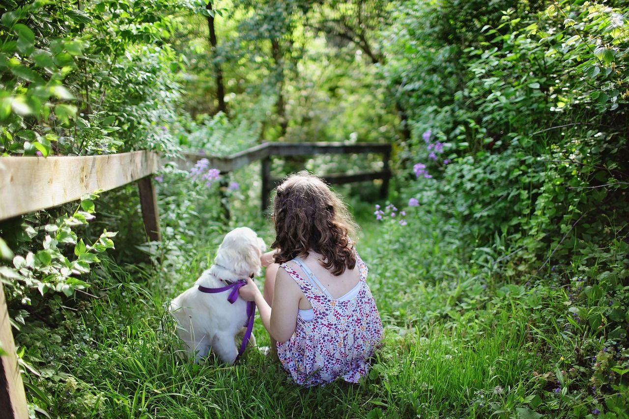 La importancia de la educación de los animales desde cachorros