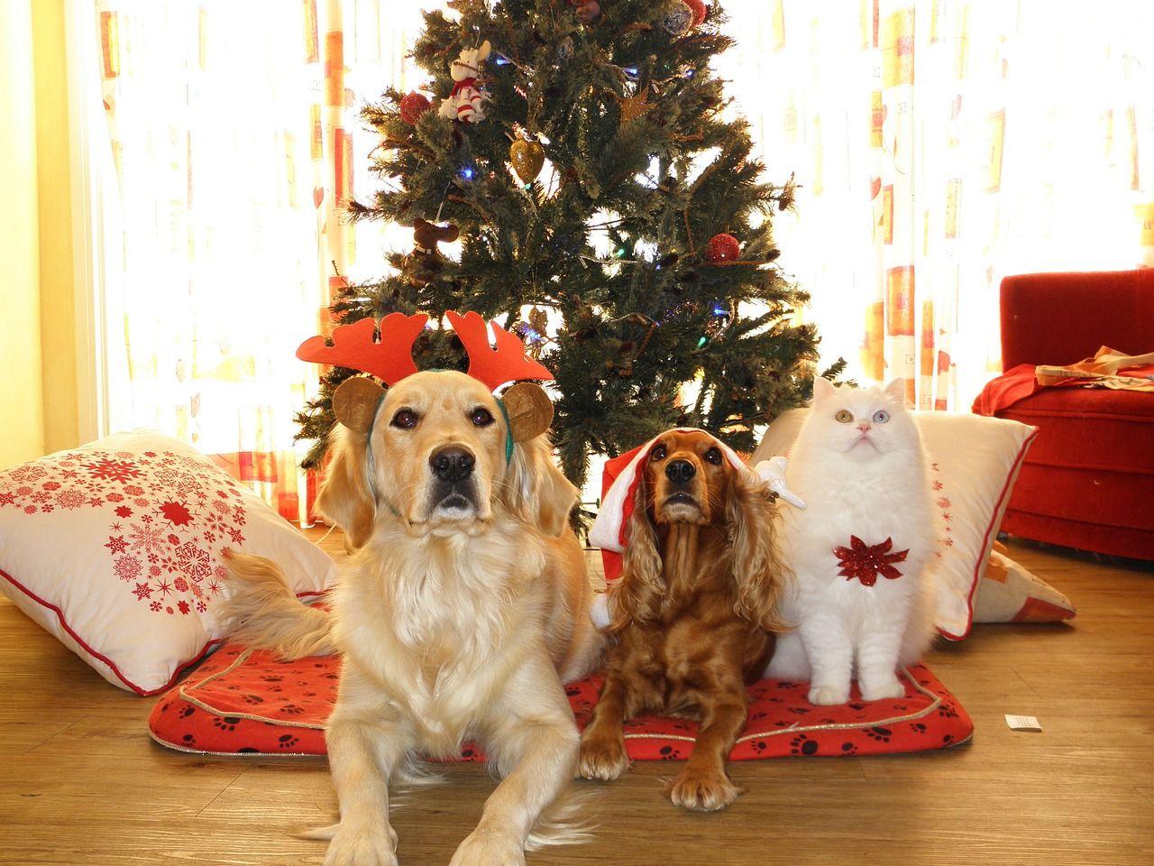 ¿Por qué no debes regalar una mascota a tus hijos en Navidad?