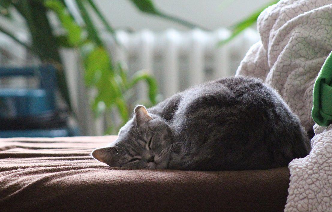 Cómo saber si un gato tiene frío