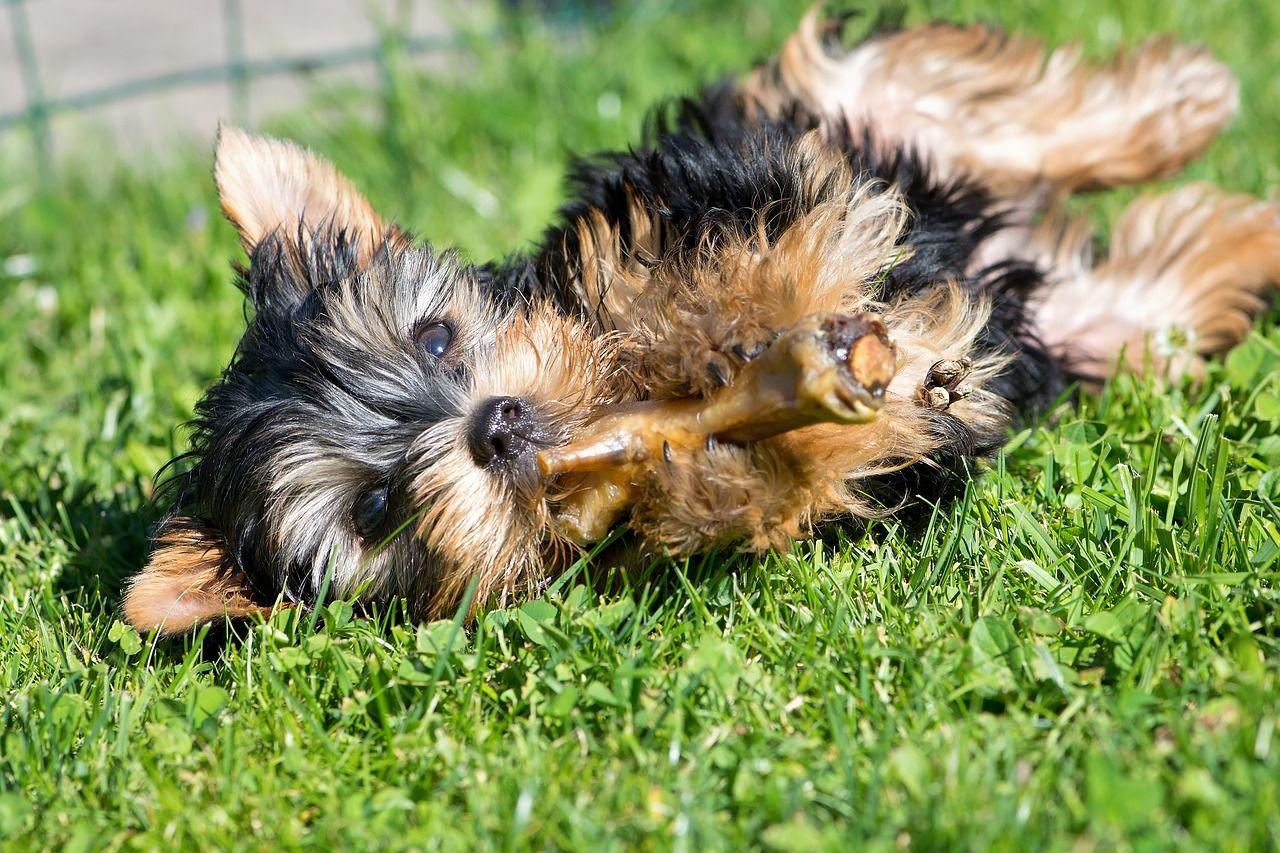 Guía de la dieta BARF para mascotas: qué es y cómo se administra