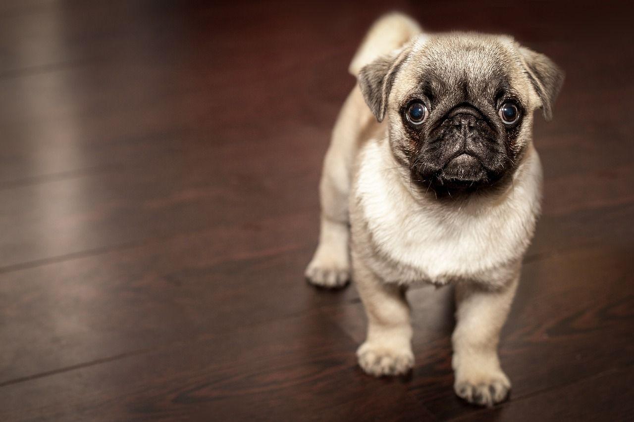 Qué es un microchip para mascotas y por qué deberías ponérselo a la tuya