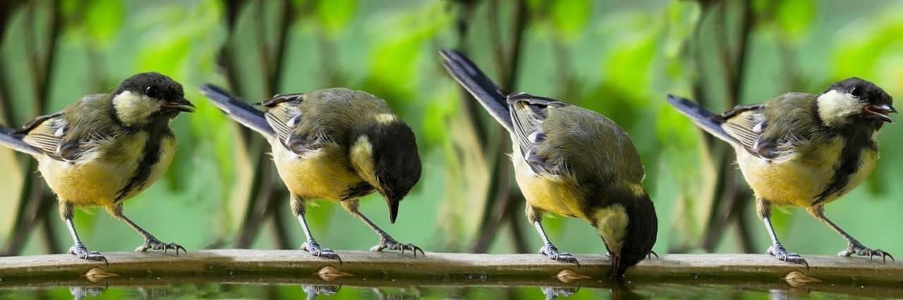 Mejores razas de pájaros para tener como mascota