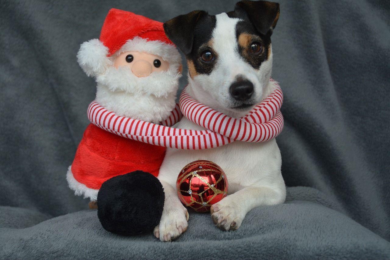 Qué regalar a tu mascota esta Navidad