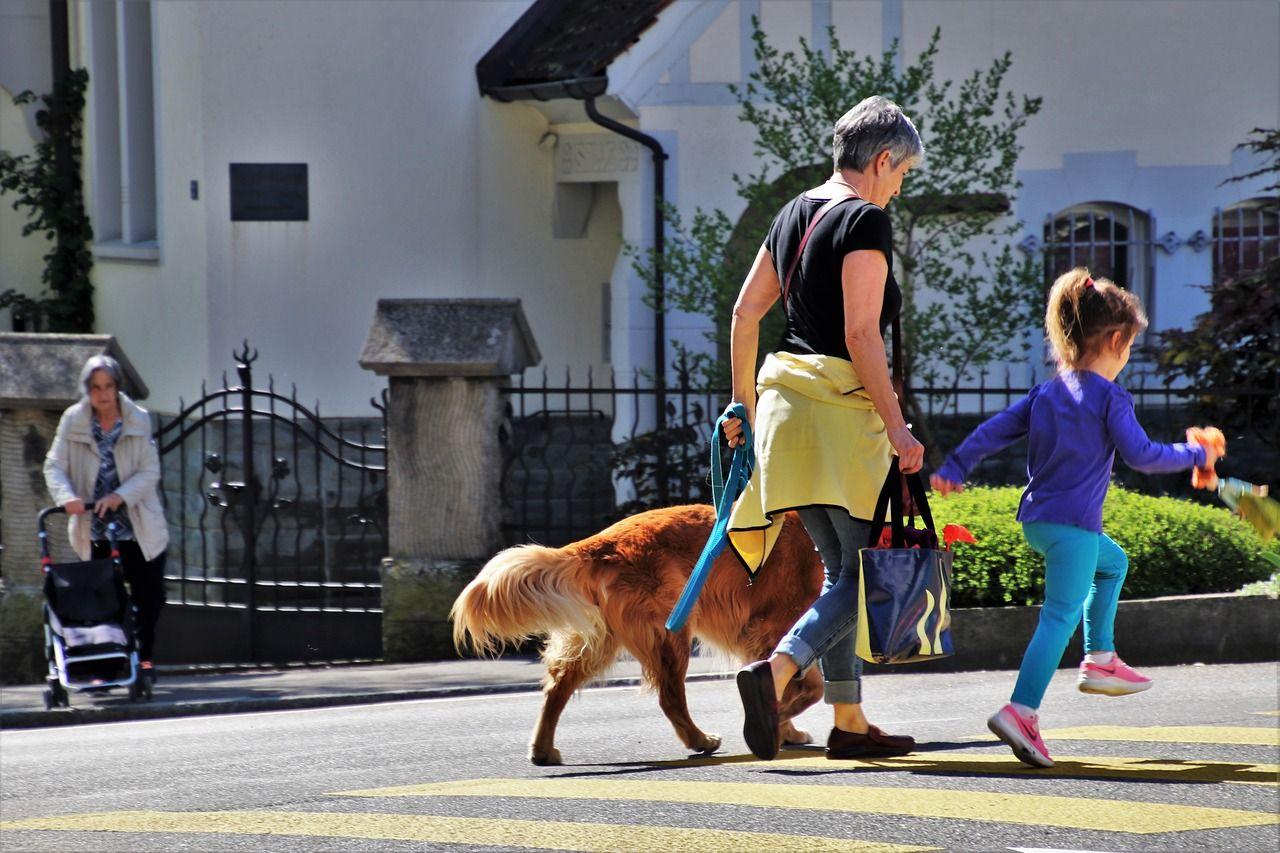 El número de perros supera al número de niños en algunas ciudades