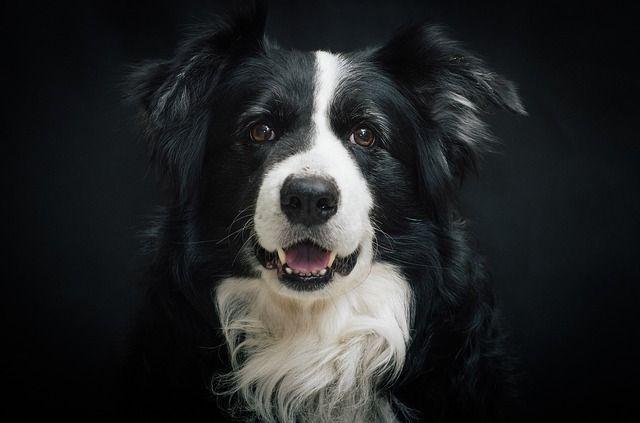 Cómo saber si tu perro es feliz: 10 señales de felicidad canina