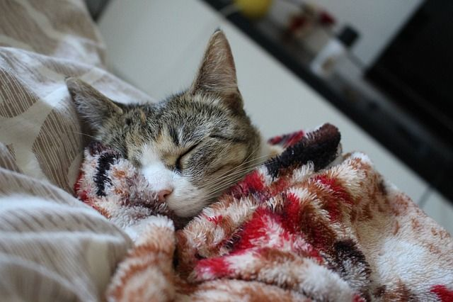Mi gato no quiere comer y duerme mucho: causas y soluciones