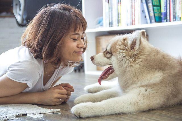 Consejos para tener un perro en un piso