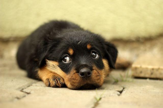 cómo saber si tu perro es feliz