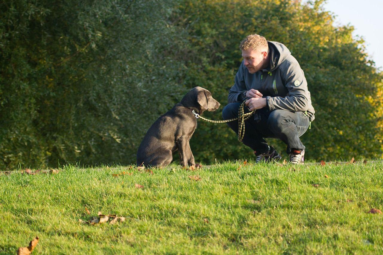 Cómo hacer que tu perro se siente: 5 claves para conseguirlo