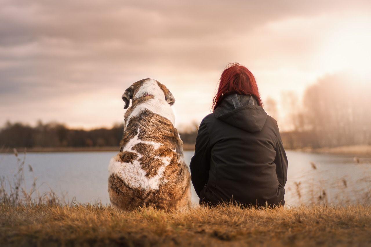 Cómo saber si mi perro me quiere: 5 señales del amor canino