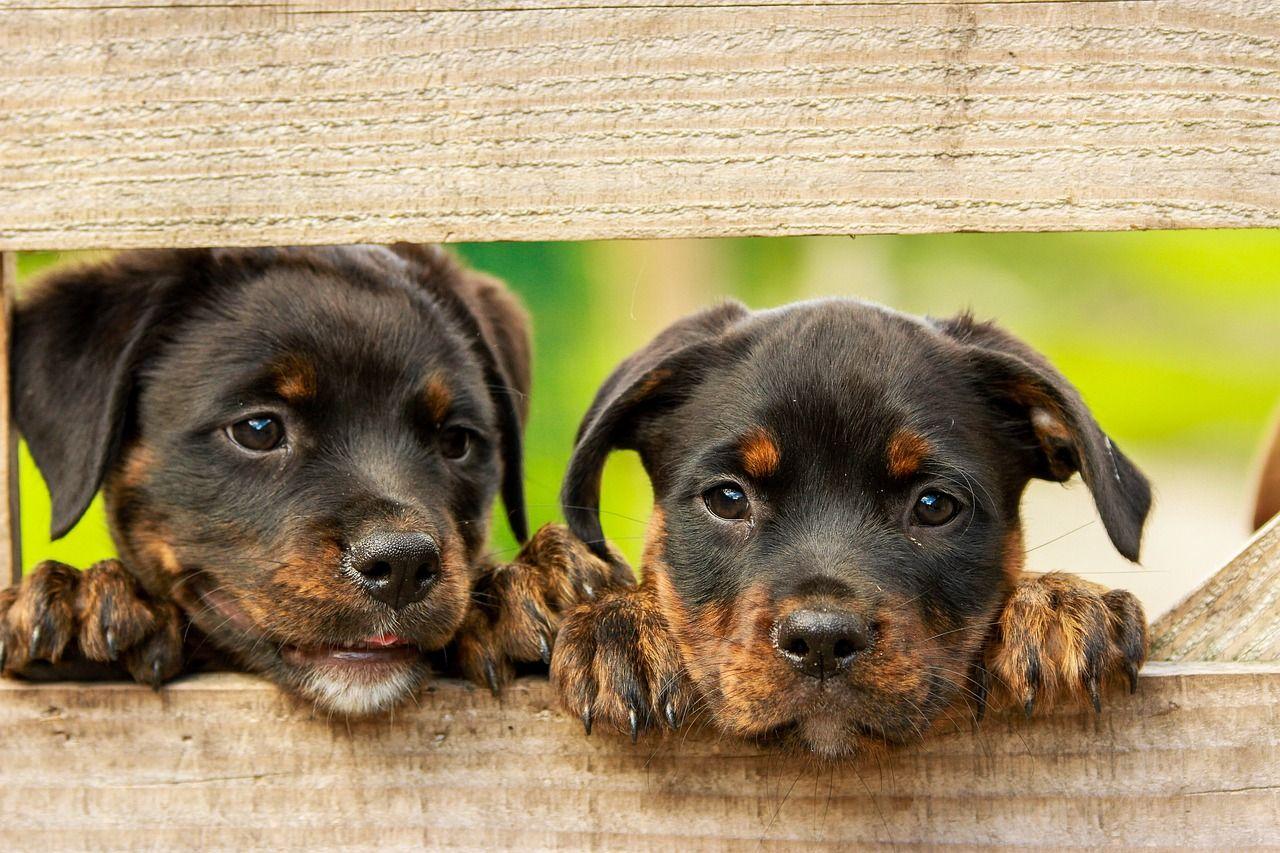 Top 10 de nombres de perros machos originales para tu mascota