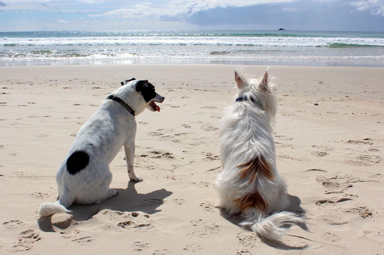 Todo lo que debes saber para disfrutar de unas vacaciones con mascotas