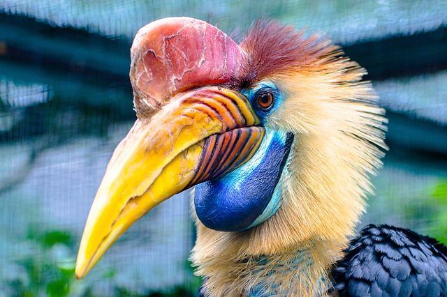 Pájaros raros: ¿cuáles son las 5 especies más extrañas del planeta?
