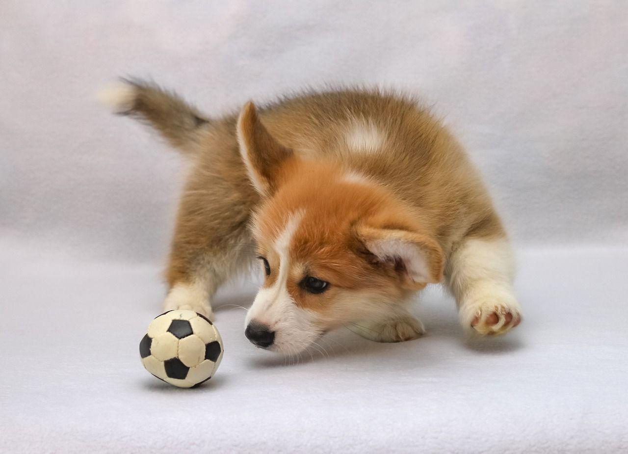 Los 5 accesorios de perros imprescindibles si tienes uno en casa
