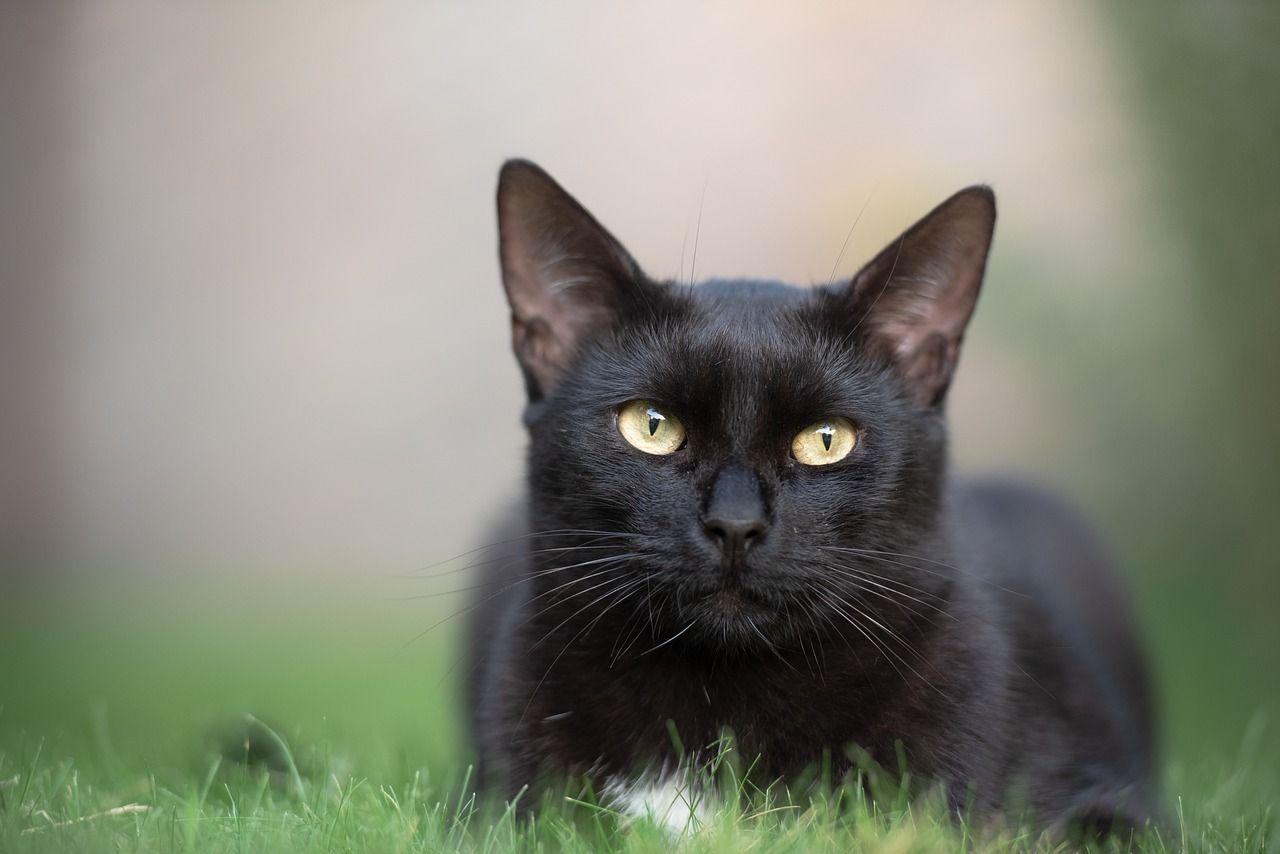La leche para gatos y 4 falsos mitos más sobre estos animales