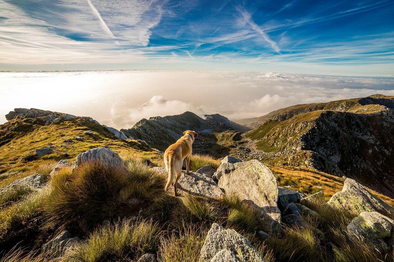 Collar GPS para perros: todo lo que debes saber sobre él