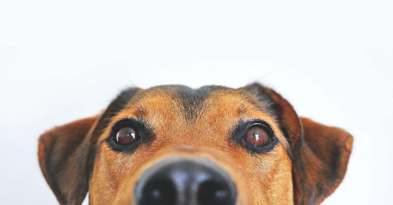 Mal aliento en perros: posibles causas y cómo combatirlo