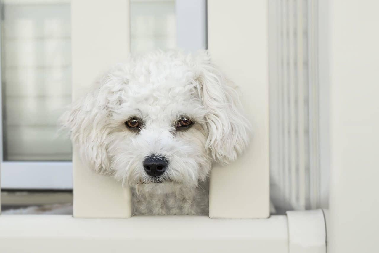 Ansiedad en perros: principales causas, síntomas y soluciones