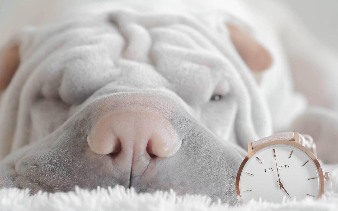 ¿Afecta el cambio de hora de octubre a nuestras mascotas?