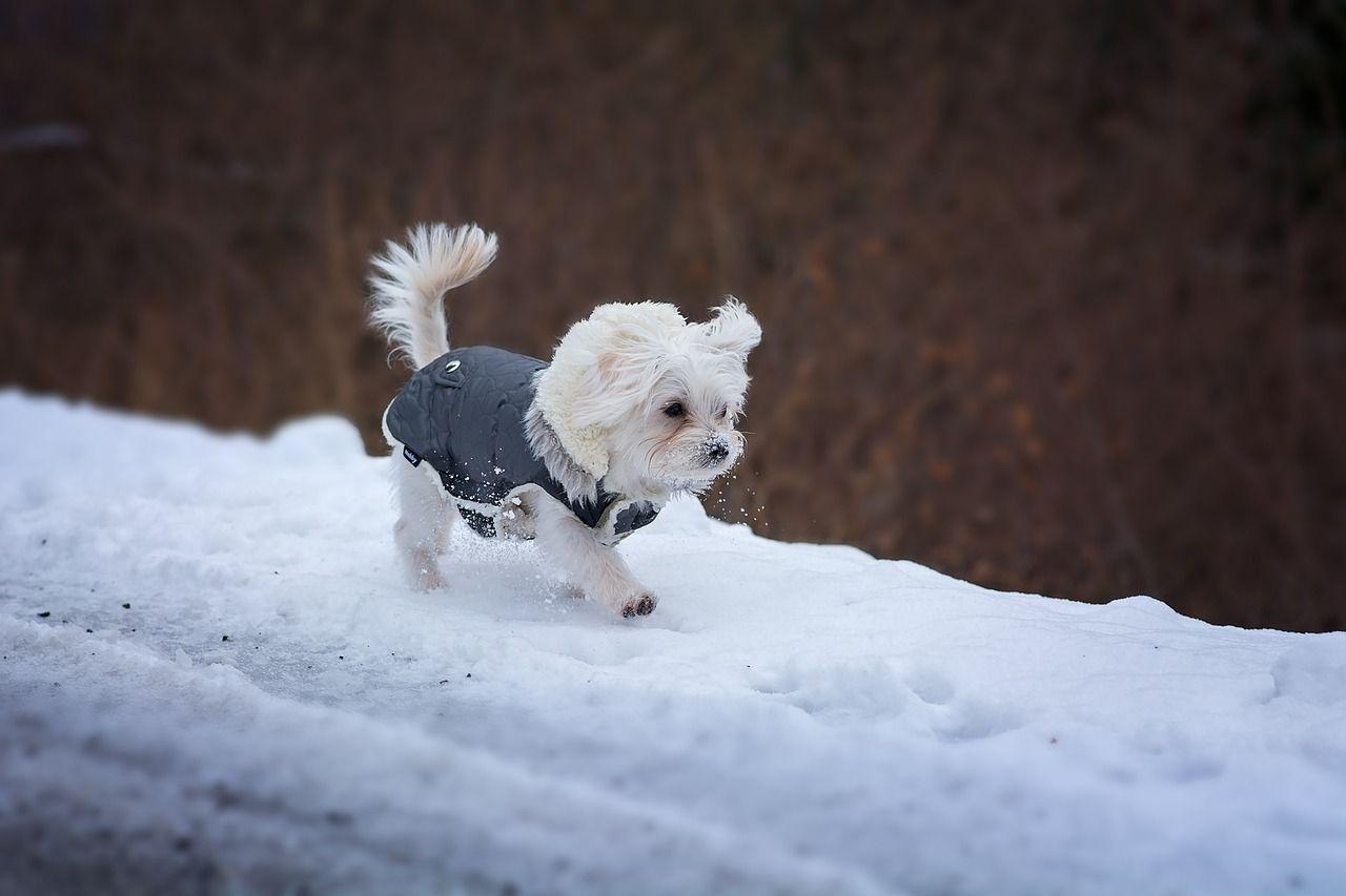 Los perros tienen frío: ¿necesitan realmente ropa de mascotas?