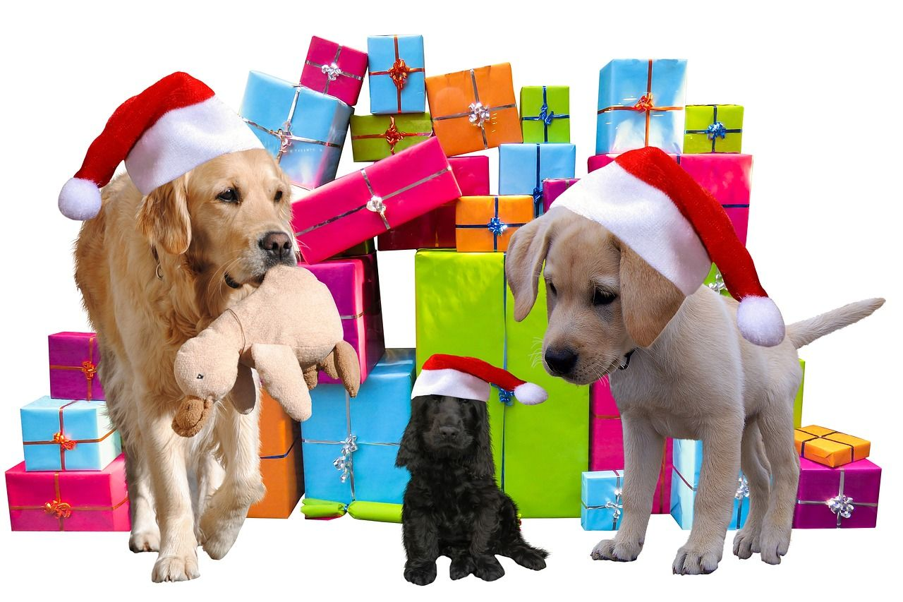 Regalos de Reyes Magos que agradecerían tus mascotas (y tú)