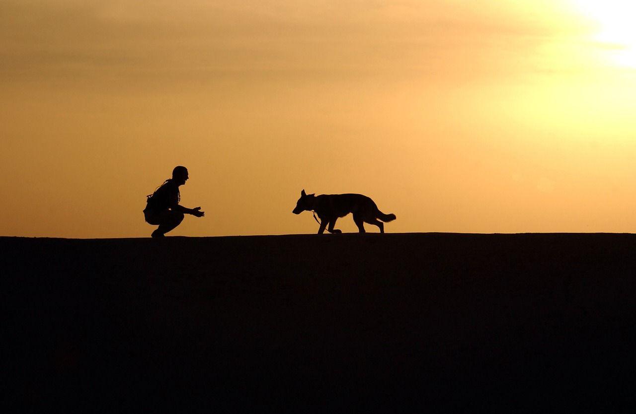 Qué raza de perro elegir según tu situación: la guía definitiva