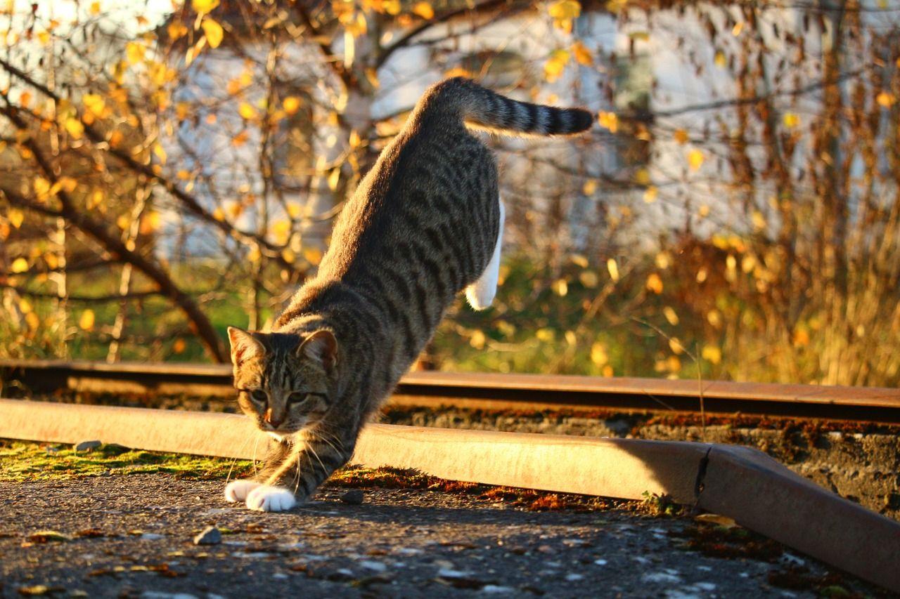¿Por qué los gatos caen de pie siempre? Hay una explicación científica