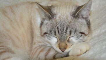 dormir con gatos