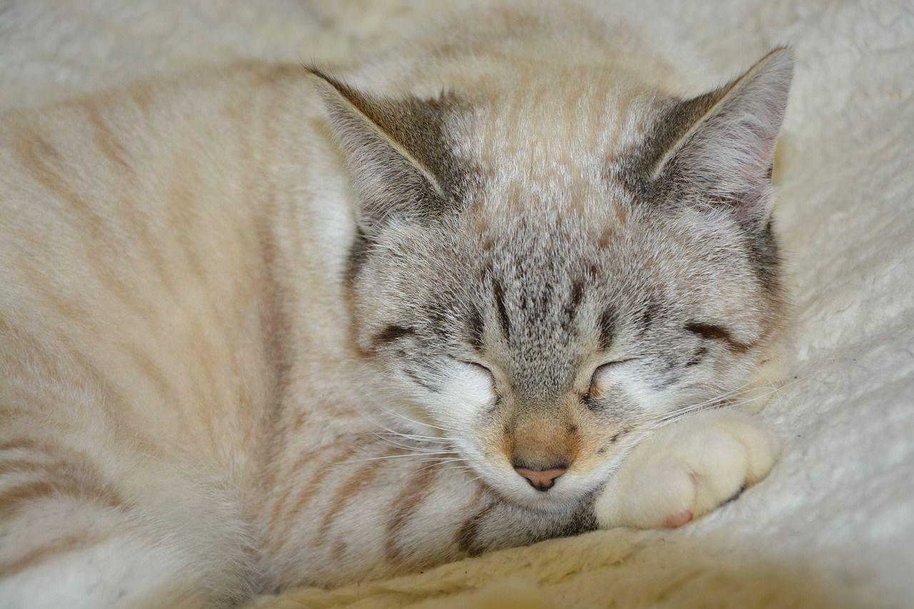 Dormir con gatos: 5 beneficios para ambos que quizás no conocías