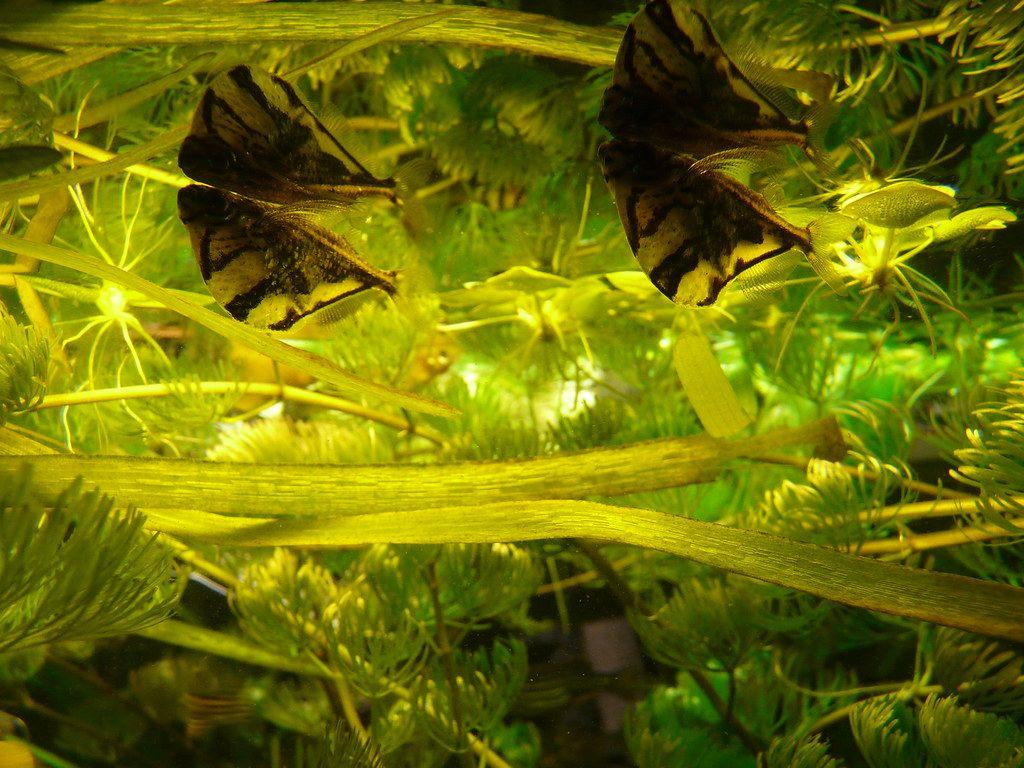 peces hacha marmol
