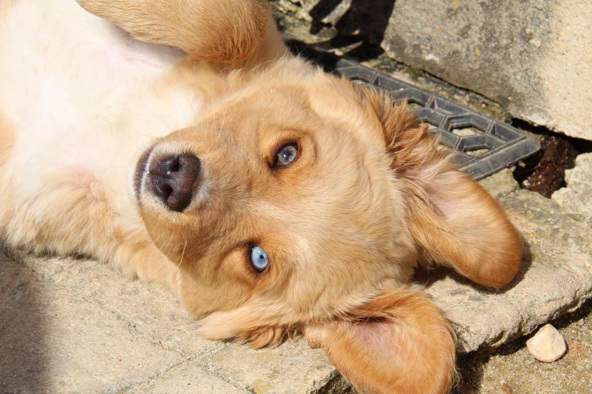 Las enfermedades de la piel más comunes en perros
