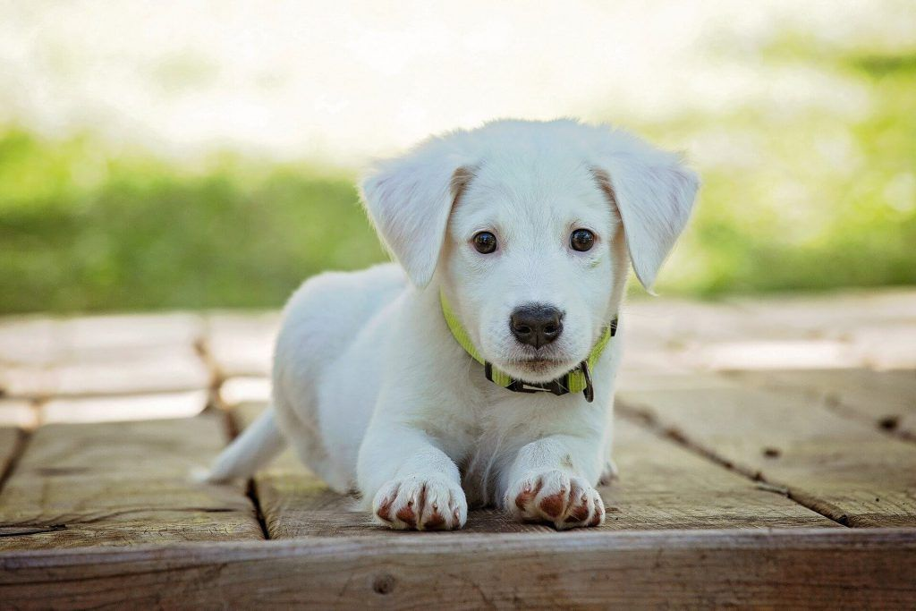 nombre perras