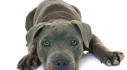 Artritis en perros: síntomas y tratamiento