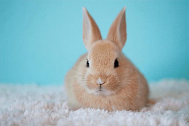 Mi conejo tiene sarna