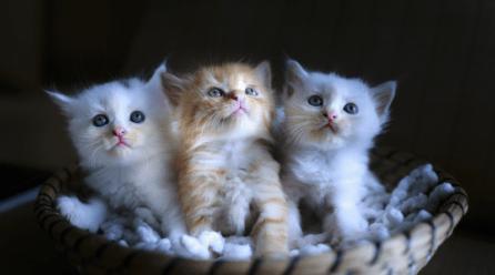 Esperanza de vida de los gatos