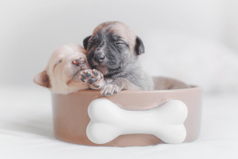 Perros bebés: primeros cuidados