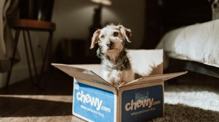 ¿Qué hacer cuando tu perro se queda solo en casa?