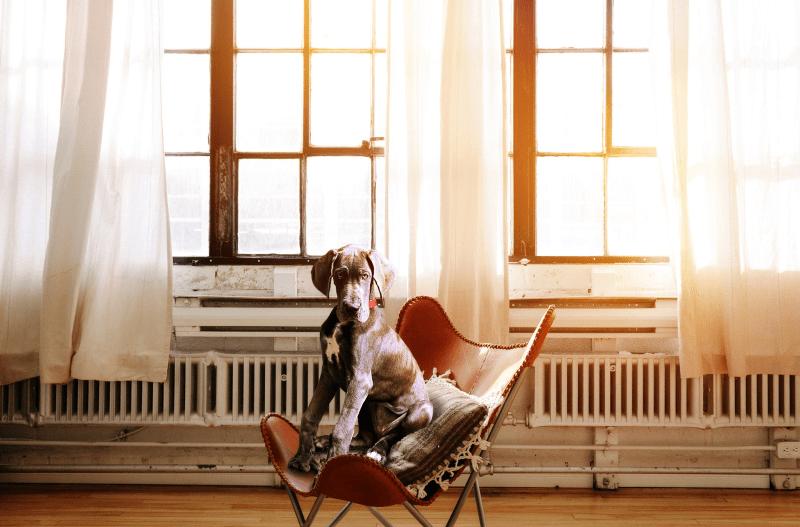 ¿Cómo mantener a un perro sentado sin moverse? Claves de entrenamiento