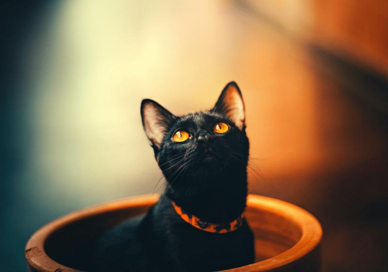 ¿Cuál es el mejor collar para mi gato?
