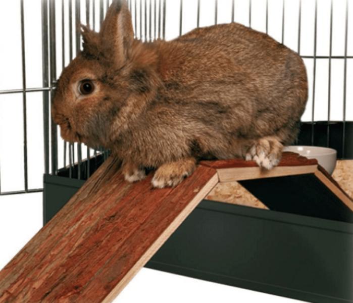 10 mejores juguetes para conejos
