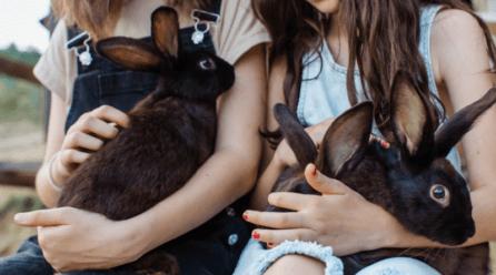 Razas de conejos y sus características
