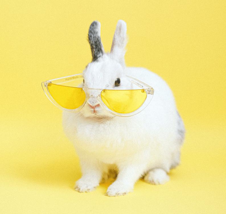 accesorios conejos