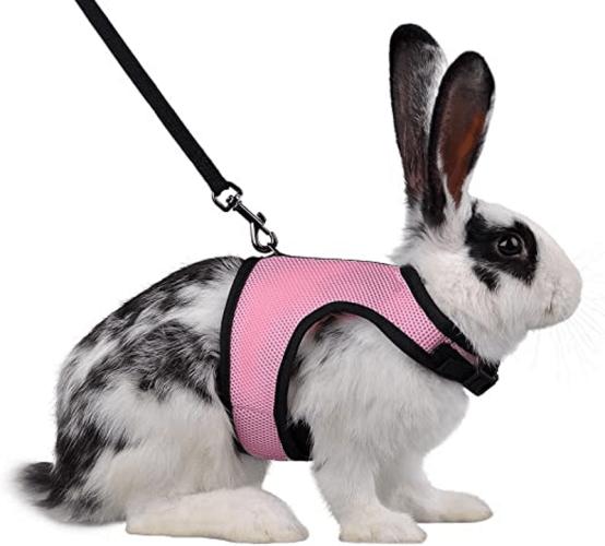 3 mejores arneses para tu conejo