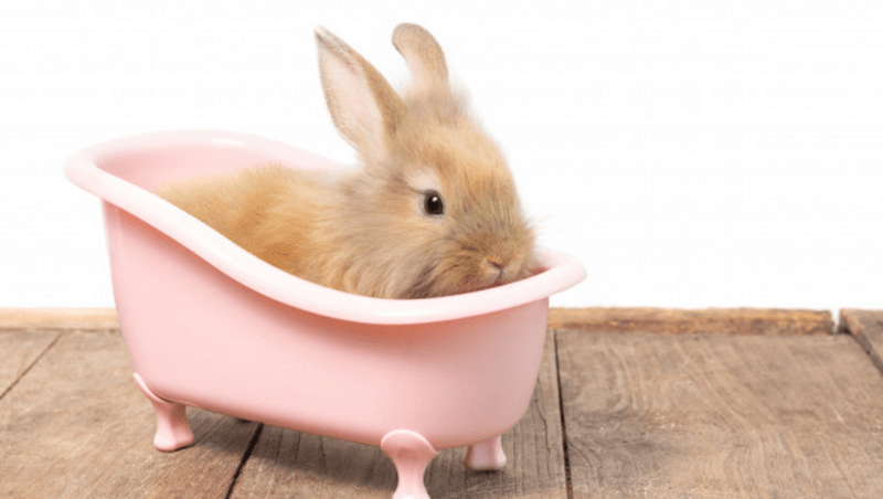 ¿Puedo bañar a mi conejo?