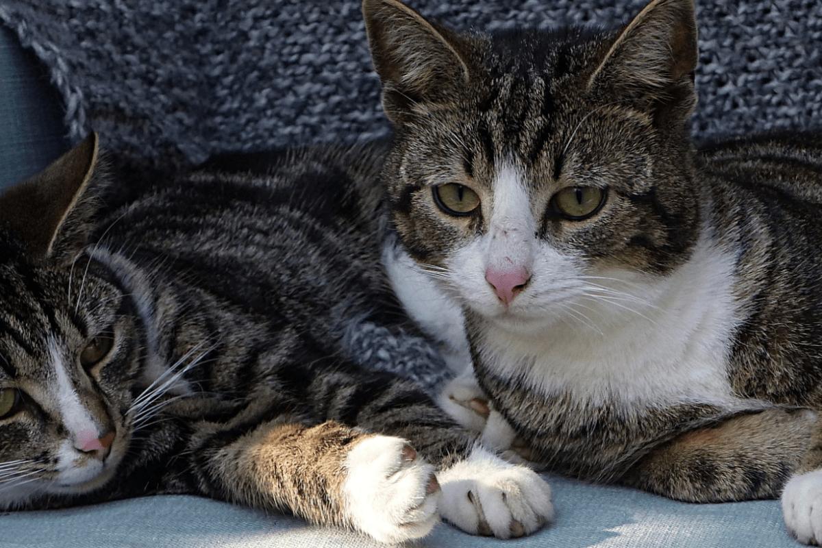 ¿Qué es mejor: gato o gata?